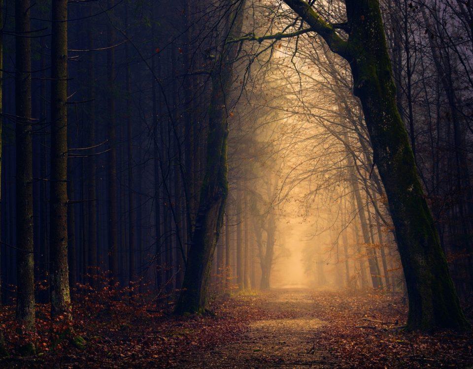 Dunkelheit Licht Wald